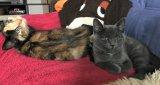 Kira und Stella